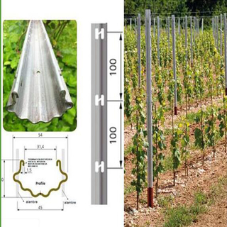 150g/m2 Hot Dipped Galvanized Pole for Vineyard, Grape Stake
